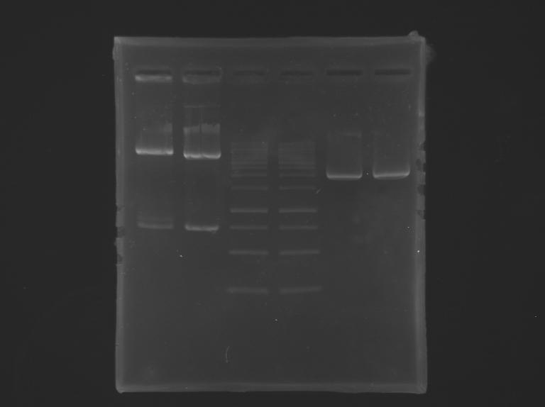 File:IGEM Paris RG PCR 04 08 2012.BMP