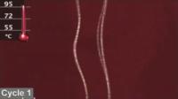 Denaturing DNA.png