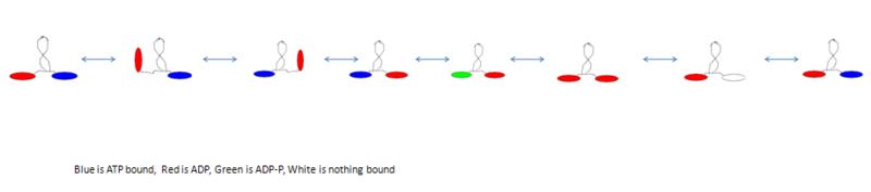 File:Larry's simpler model.png