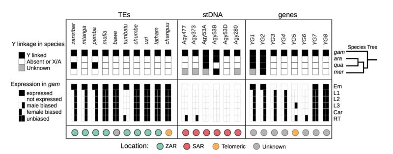 File:Papathanos genomics1.png