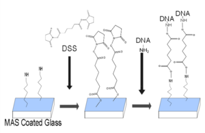 A series of attaching aminated DNA to glass reaction