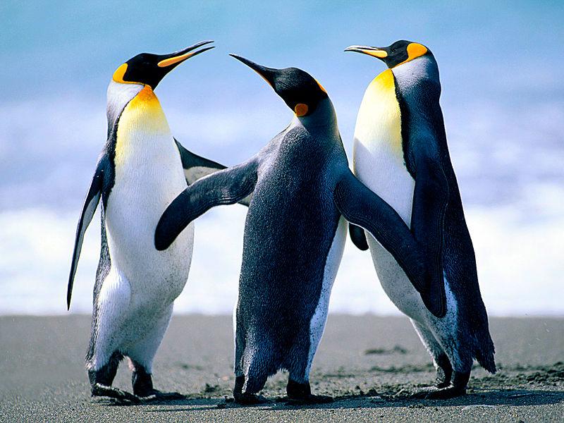 File:Penguins jel.jpg