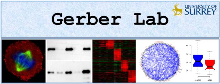 Gerber Lab banner.PNG