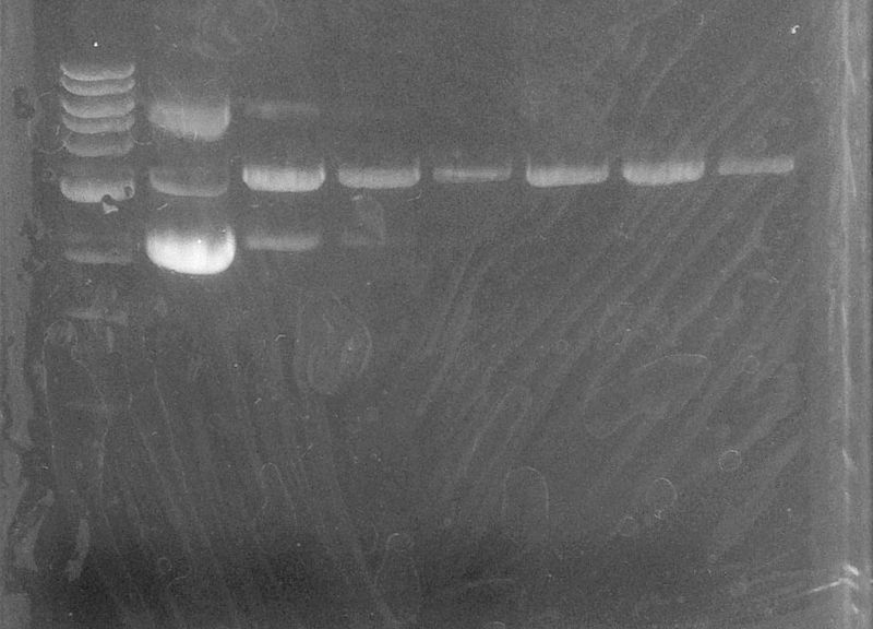 File:09710 enzymetest.jpg