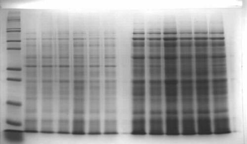 AiiAtestexpression.JPG