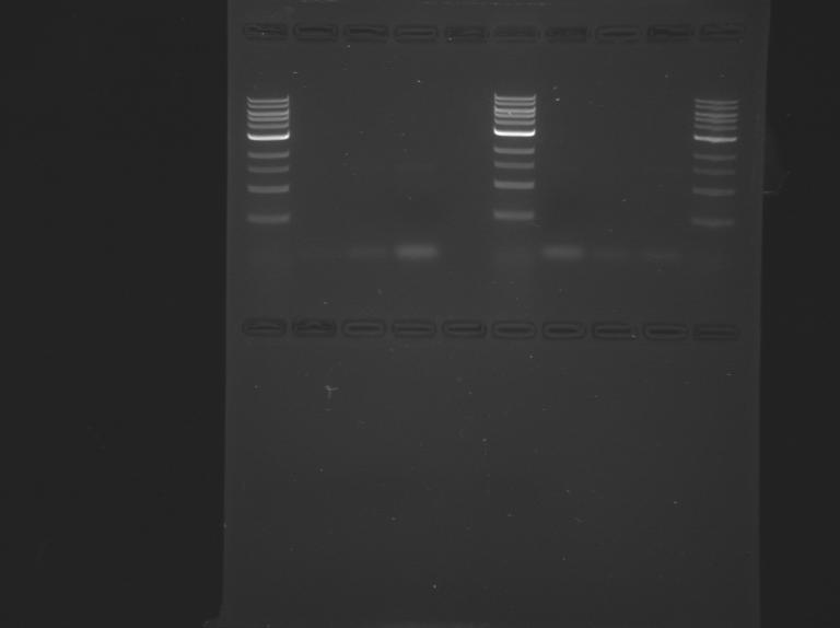 File:S15-M1D4 TR-Orange-Green.jpg