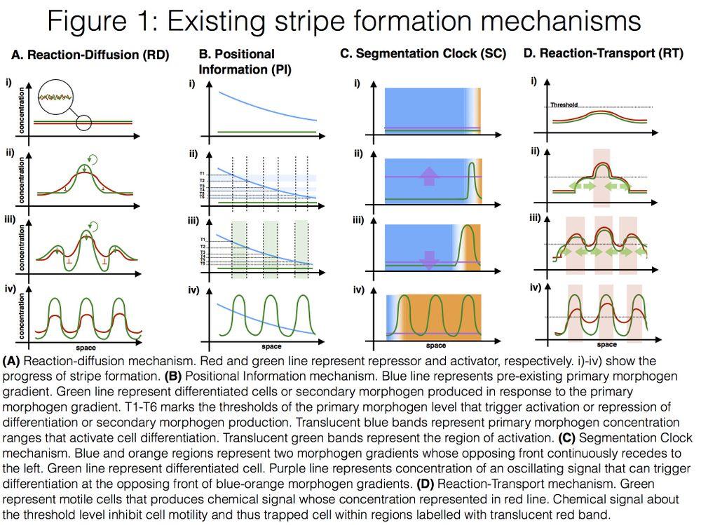 Stripeformationfig1.png