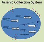 UIUC ArsR System.jpg