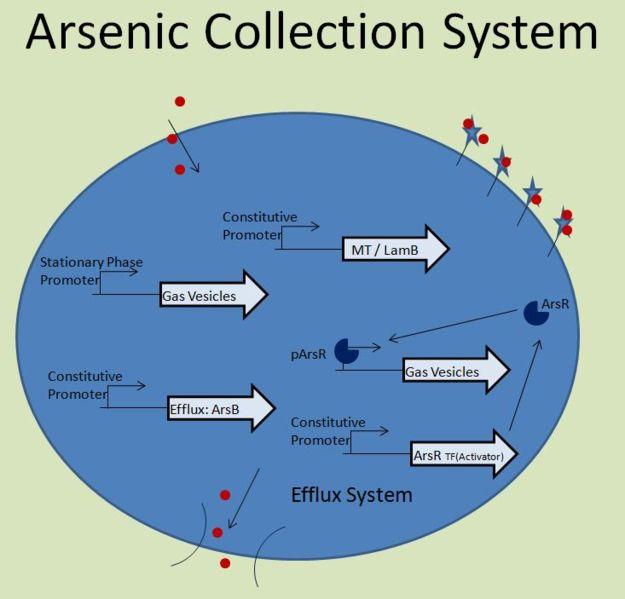 File:UIUC ArsR System.jpg