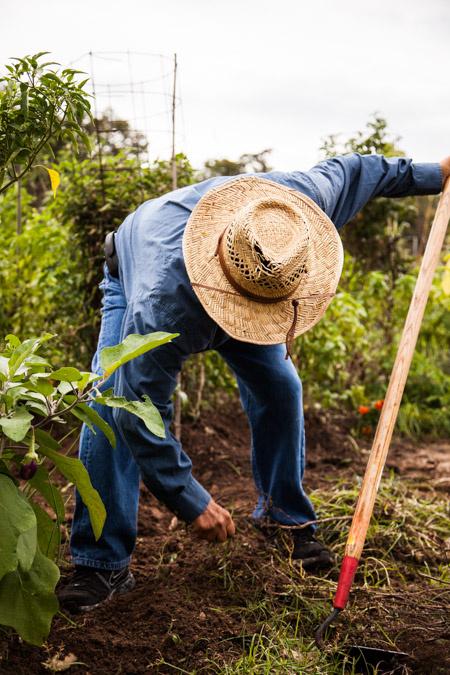 heart-healthy-gardening