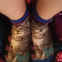 Pussy cat socks pair