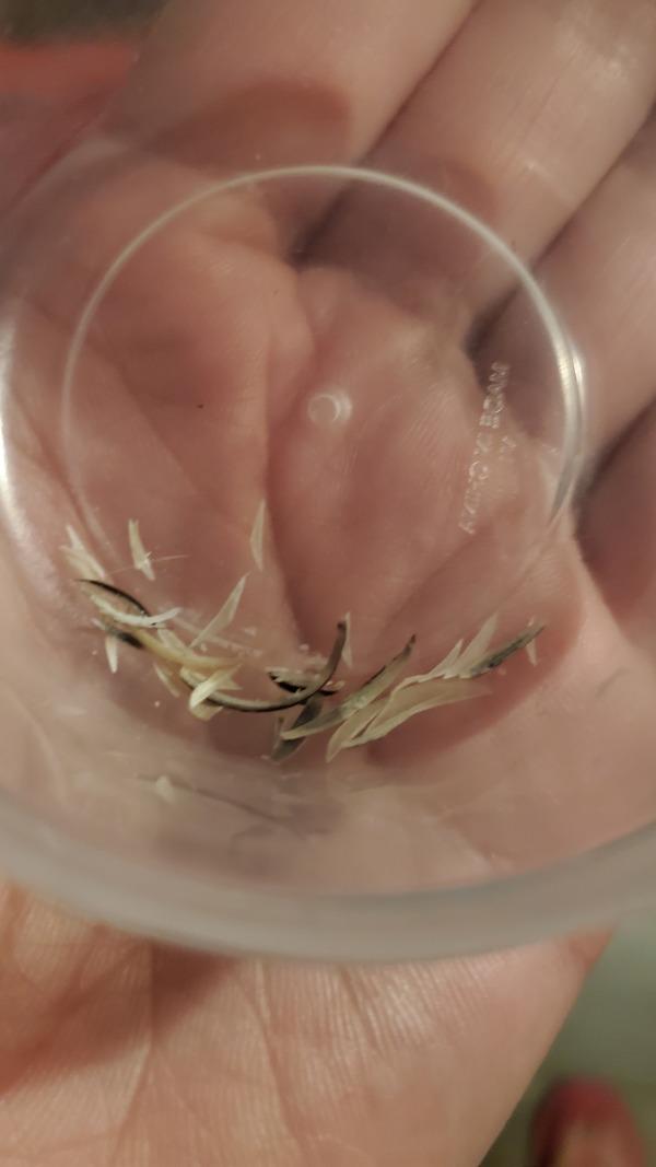 Toe nail and finger nail clippings!