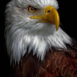 Eagle dbe1a67f 5619 4178 93c1 ce4f49c8101c
