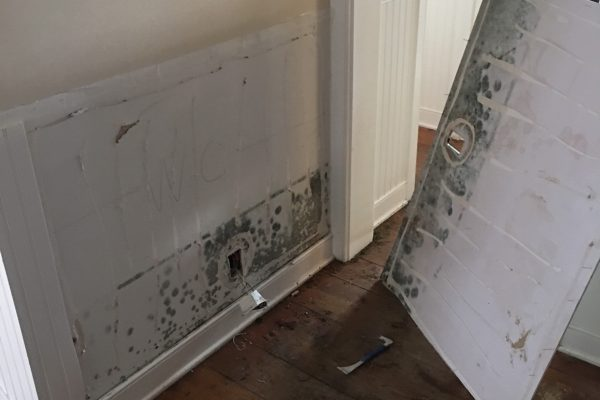 Mold Remediation in Thousand Oaks, CA
