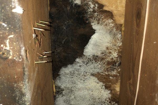Water Damage Repairs in Newbury Park, CA