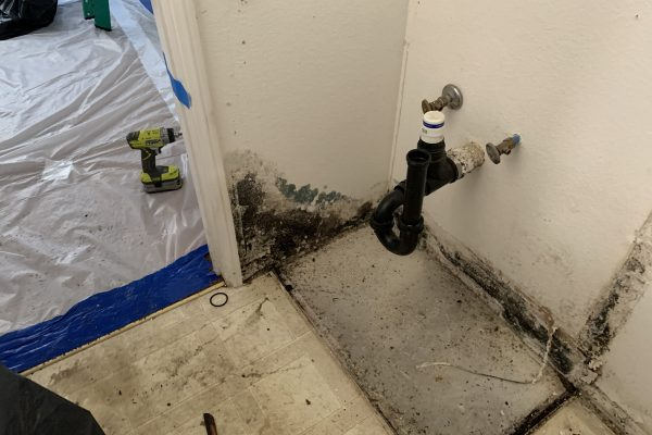 Mold Removal San Diego, California