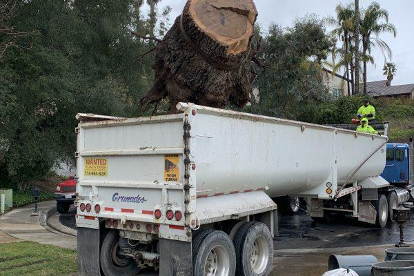 Oak Tree Removal Calabasas, California