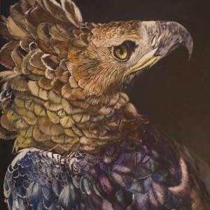 "Relict Reign - African Crowned Eagle ; #6 of 60 in my ""Eagles of the World"" series ; Watercolor on Scratchboard by Justin Dancing Hawk."