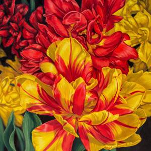 Tulipomania 14: Red and Yellow by Fiona Craig. Oil Painting showing Plants.