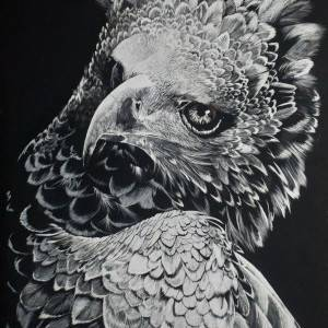 "Martial Injunction -  African Martial Eagle ; #3 in ""Eagles of the World"" Series by Justin Dancing Hawk."