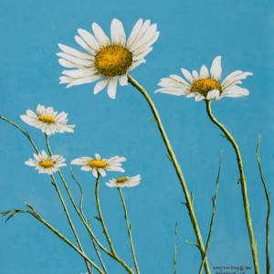 Daisies in the Wind by Mary Ann King. Oil Painting showing Plants.