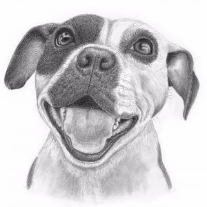 "9"" x 12"" Custom Pet Portrait by Tammy Liu-Haller. Pencil showing Pets/Animals."