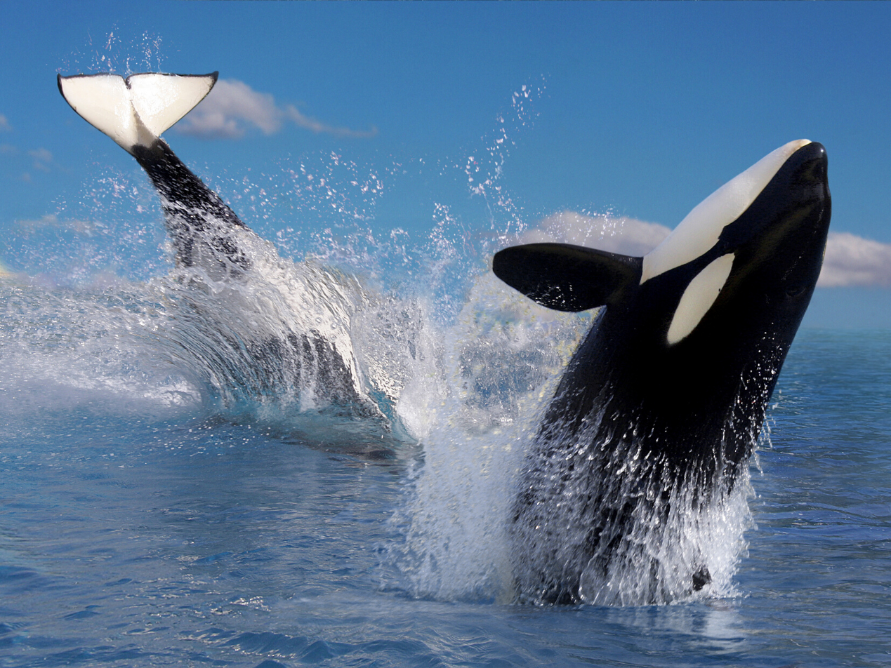 Why Project Orca is the Best HIPAA Compliant Email Marketing Tool on the Market - paubox