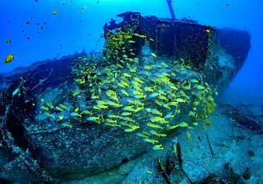Oahu Premium Submarine Tour (Japanese) image 3