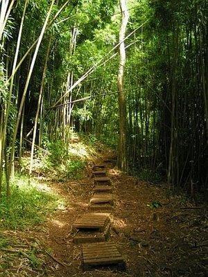Product Volcanic Rainforest Hike