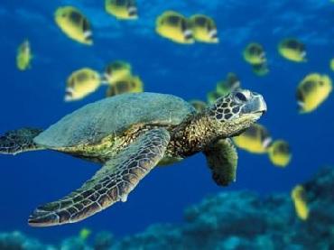 Snorkel & Dolphin Adventure image 2