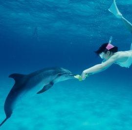 Product Wild Dolphin Swim Snorkel Combo
