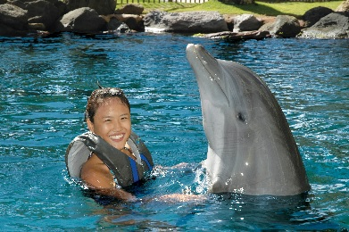 Dolphin Quest Adventure image 1