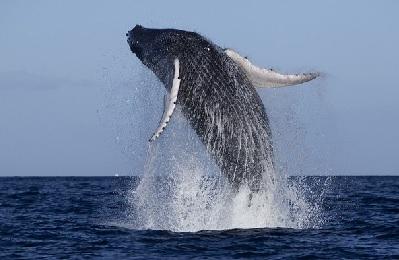 Product Elua Raft Whale Watch