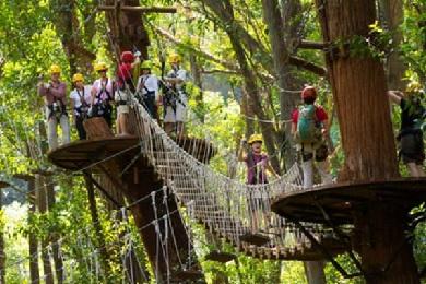 Product Kohala Canopy Zipline Adventure