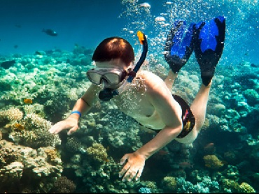 Product Snorkel Lanai and Dolphin Watch