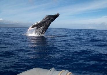 Product Whale Watch Catamaran
