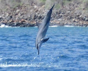 Product Lanai Dolphin Morning Adventure Cruise