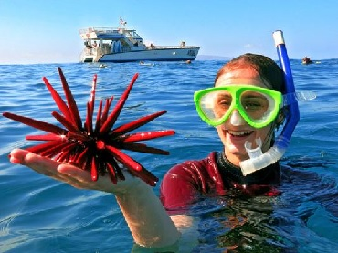 Product Afternoon Snorkel To Molokini or Coral Gardens