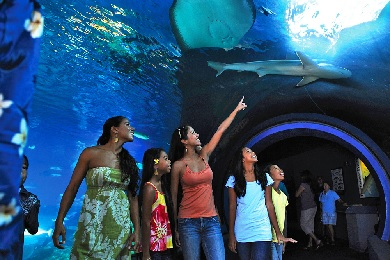 Maui Ocean Center Admission image 1
