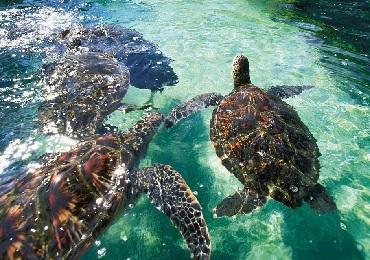 Product Maui Ocean Center Admission
