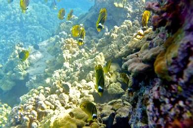 Mauna Lani Snorkel Sail Adventure