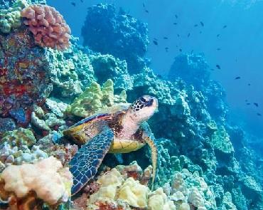 Lanai Snorkel & Dolphin Watch image 1