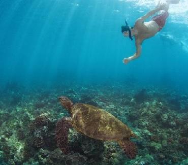 Product Molokini Turtle Arches Adventure