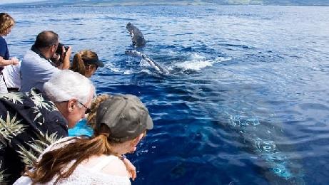 Whale Watch Lahaina