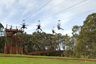 Upcountry Zipline Adventure 4-Lines