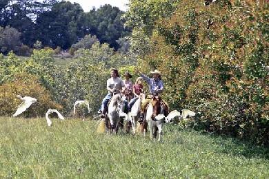 Princeville Paniolo Horseback Ride image 1