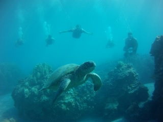 Product Discover Olowalu Excursion