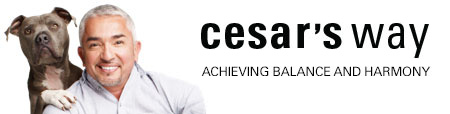 Cesar's Way coupon codes