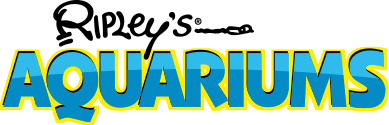 Ripley's Aquarium coupon codes