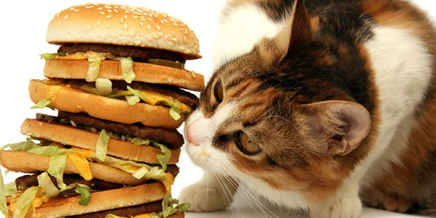Nutrition 101 for You and Your Cat